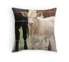 Black, White and Brown Cows Throw Pillow