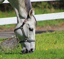 Lunchtime in the Pasture by Gilda Axelrod