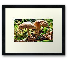 Dos Mushrooms Framed Print