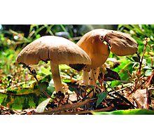 Dos Mushrooms Photographic Print