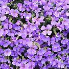 purple flowers by monkeyferret