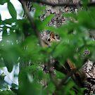 Peek-a-boo by marycloch