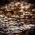 Raindrops by Lee Jones