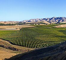 Awatere Valley by Robyn Carter