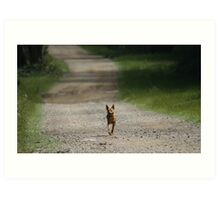 Trail Riding Dog  Art Print