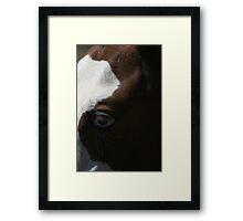 Horses eye - Blue eyes Framed Print
