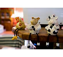 Funny farm animals Photographic Print