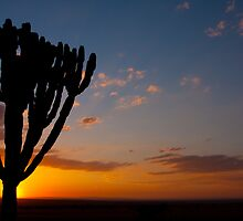 Another day in Africa by John Banks