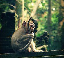 Little Monkey by Caroline Fournier