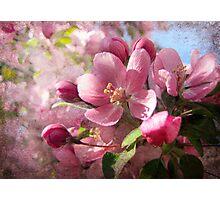Pink Dreamland Photographic Print