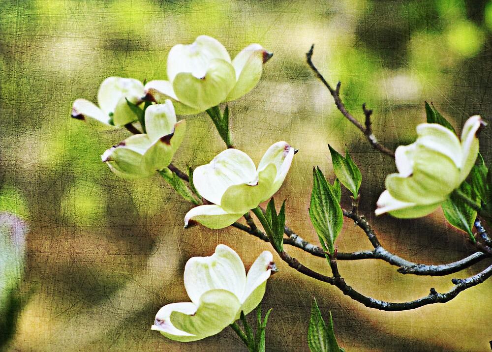 Splendid Spring by Sviatlana