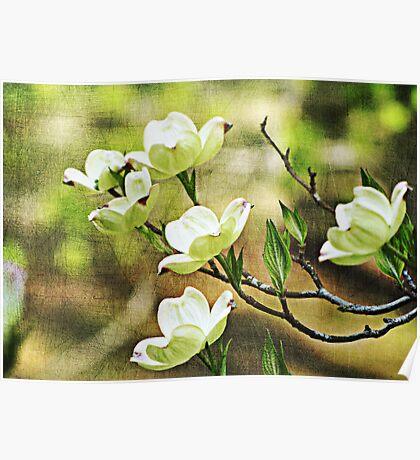 Splendid Spring Poster