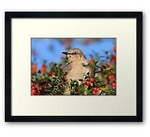 Mockingbird and Yaupon Framed Print