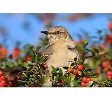 Mockingbird and Yaupon Photographic Print