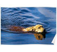 Golden Gator Poster