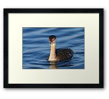 Red Eyes & Blue Water Framed Print