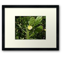 Beauty from the Beast Framed Print