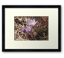 Prairie Beauty Framed Print