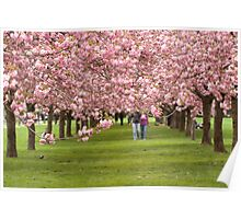 Love and Cherry Blossoms Poster