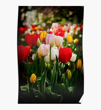 From the tulip patch Poster
