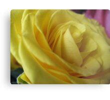 Lemon Meringue Rose Metal Print