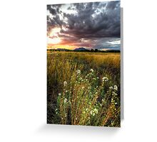 Sunset Johnson the Picture Greeting Card