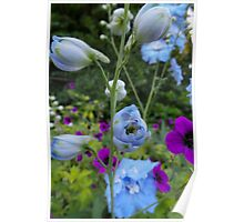 Flower Bed Buds & Blossoms Poster