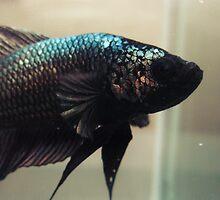 Metalic fish by Jessica Brett