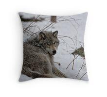 Timberwolf - Parc Omega, Montebello Throw Pillow