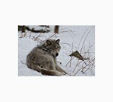 Timberwolf - Parc Omega, Montebello Unisex T-Shirt