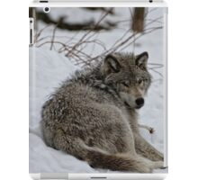 Timberwolf - Parc Omega, Montebello iPad Case/Skin