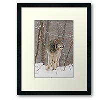 A little snow must fall! Framed Print
