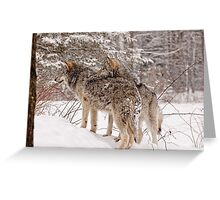 Sibling Love - Parc Omega, Montebello, PQ Greeting Card