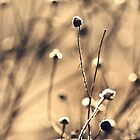 Frosted Weeds by Chrisseee