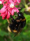 beeeee3 by millymuso