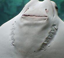 A Stingray's Smile by OriginalBologna