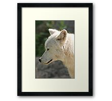 A Momentary Pause Framed Print
