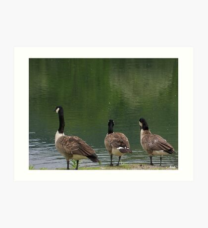 Duck Outlook Art Print