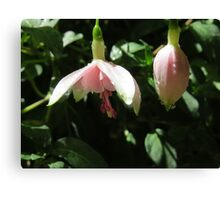 Pink Fuchsia with Droplets Canvas Print