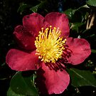Wild Rose by Natalie Cooper