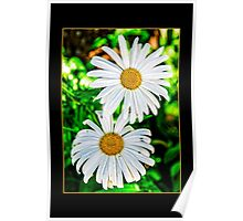 two daisies Poster