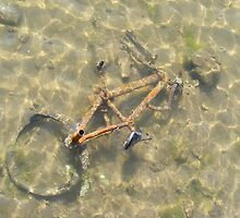 Dead Bike drowning. by Livvy Young