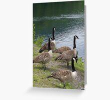 Just Duckey - Cheshire Lake,Cheshire, Massachusetts Greeting Card