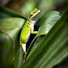 Louisiana Wildlife by RayDevlin