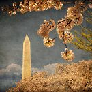 The Washington Monument by Lois  Bryan