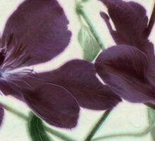 Christmas Clematis Sticker