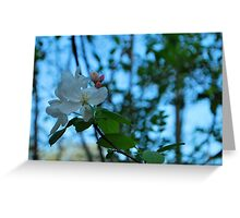 Blossoms in blue Greeting Card