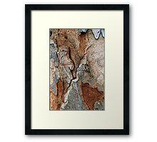 Natural Forms Framed Print