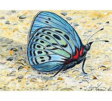 Butterfly In Blue Photographic Print
