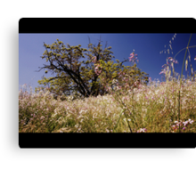 Let's Run Through The Fields Canvas Print